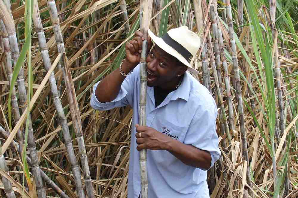 Ian Burrell in a sugar cane field